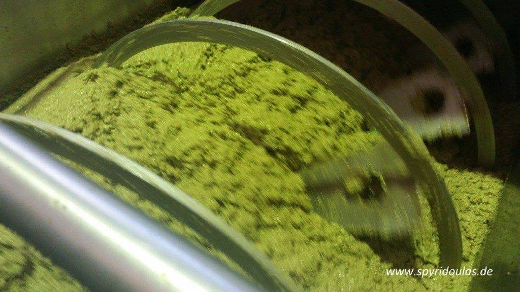 gutes Olivenöl - Oliven im Malaxer