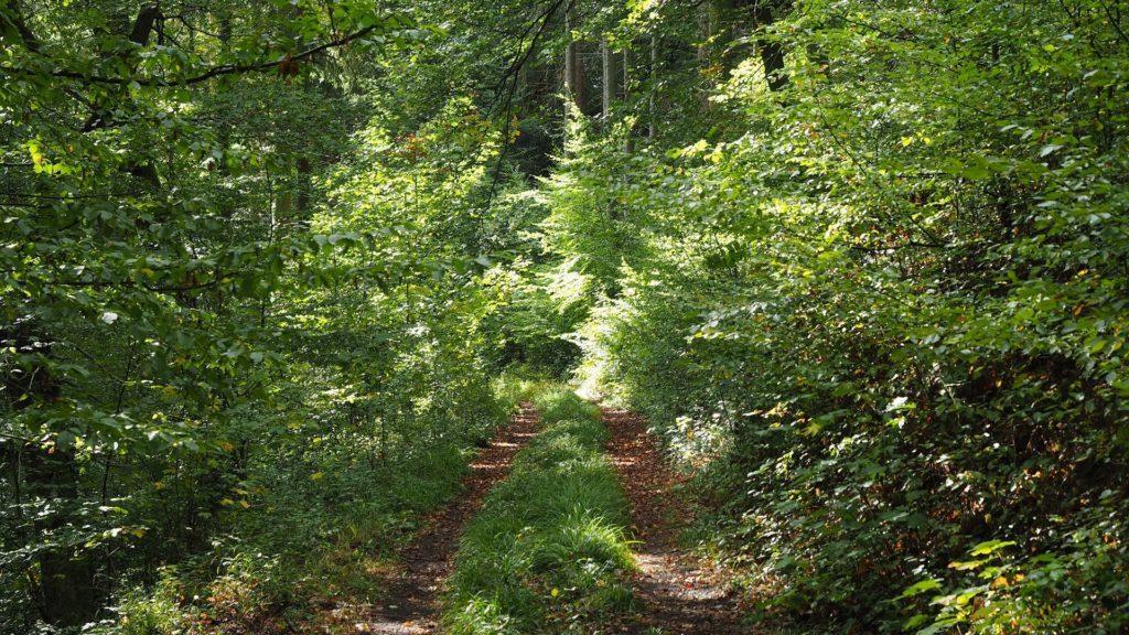 Ahrtal - verwunschener Waldweg
