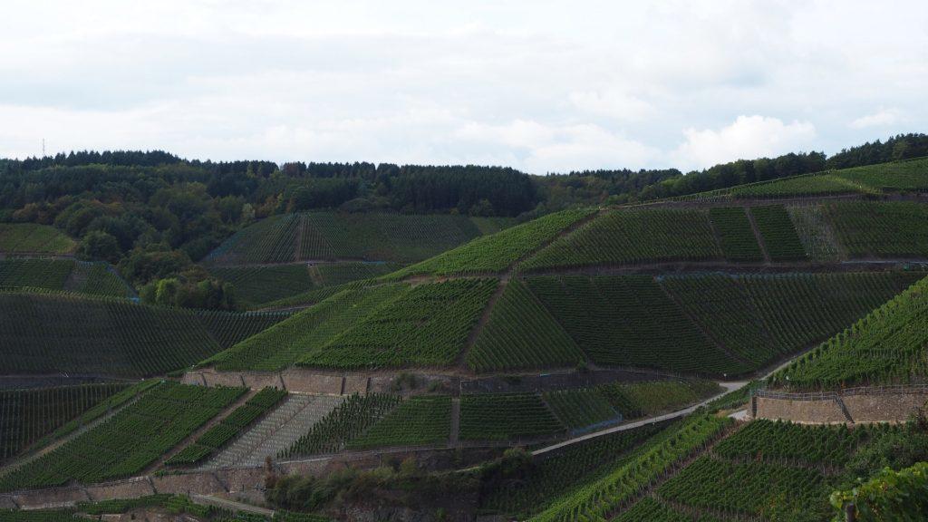 Ahrtal - Blick auf die Weinbergshänge
