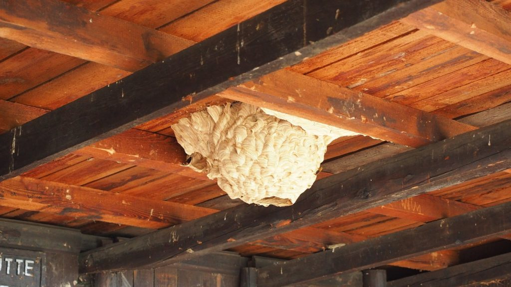 Ahrtal - Das Hornissennest in der Hütte