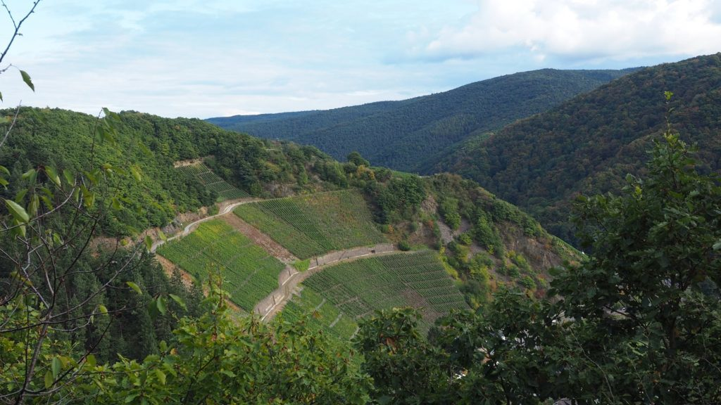 Ahrtal - in den Weinbergen oberhalb von Marienthal