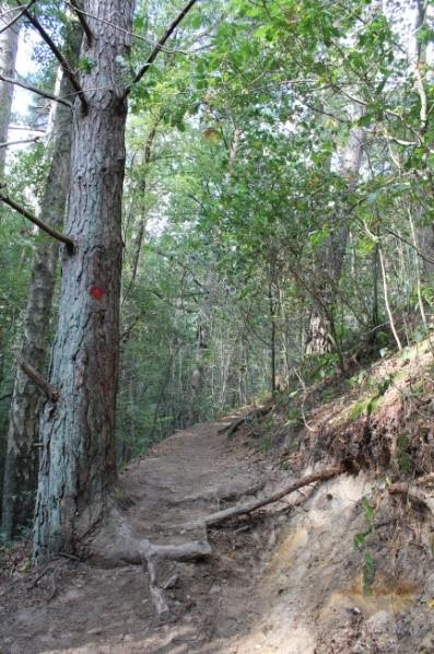Galgenvenn - die schmalen Waldwege