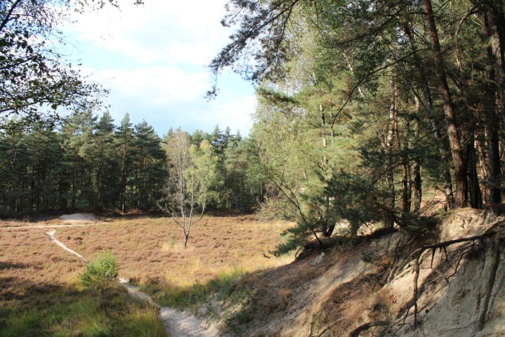 Galgenvenn - Holzsteg zieht sich durch das Moor