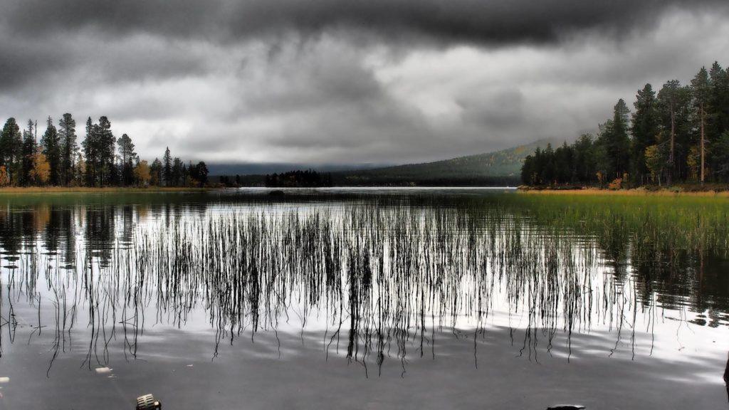Wie viel brauchst du - Pflanzen am Ufer spiegeln sich im Wasser