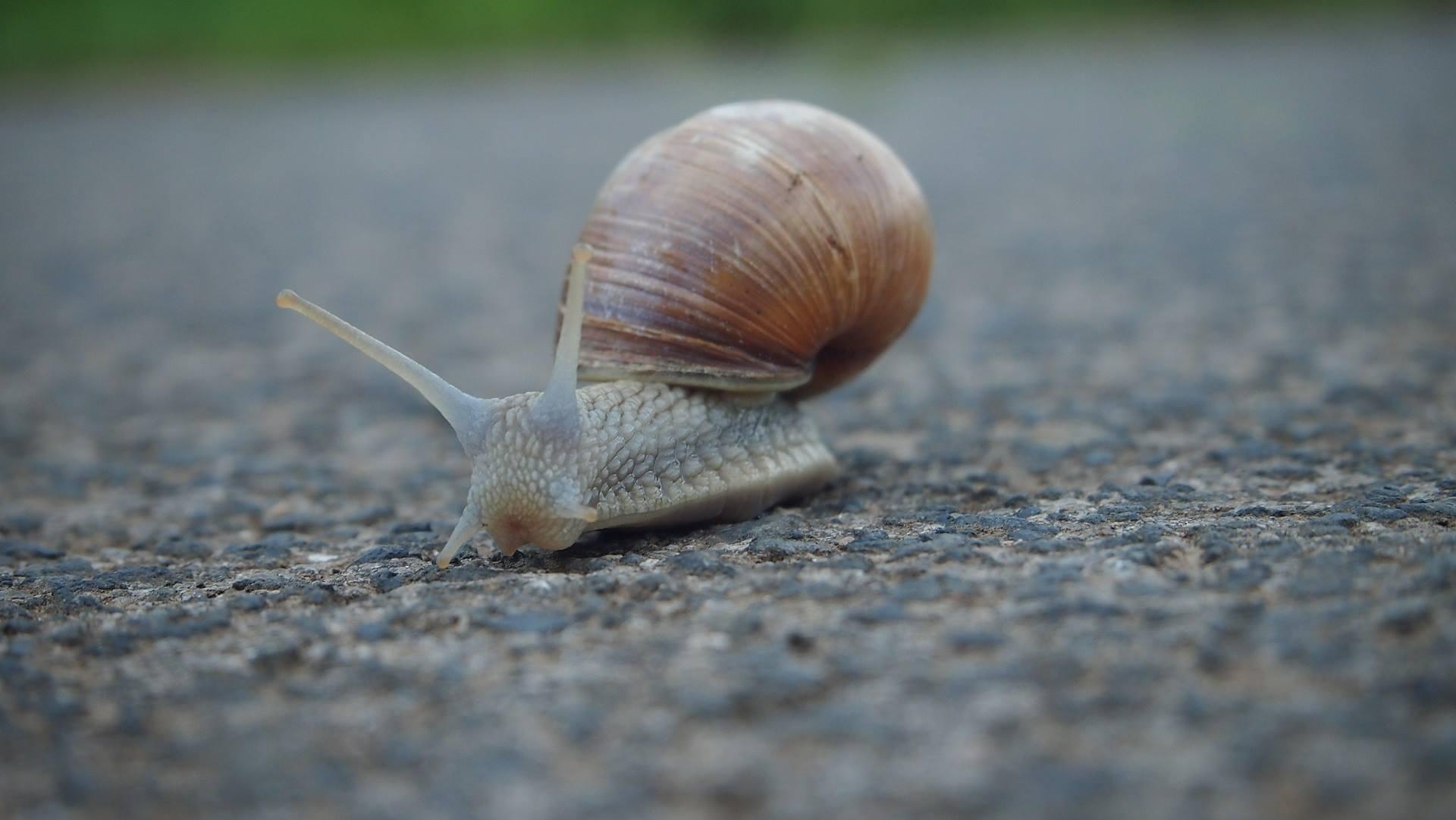 wenig Startgewicht - Foto von Schnecke