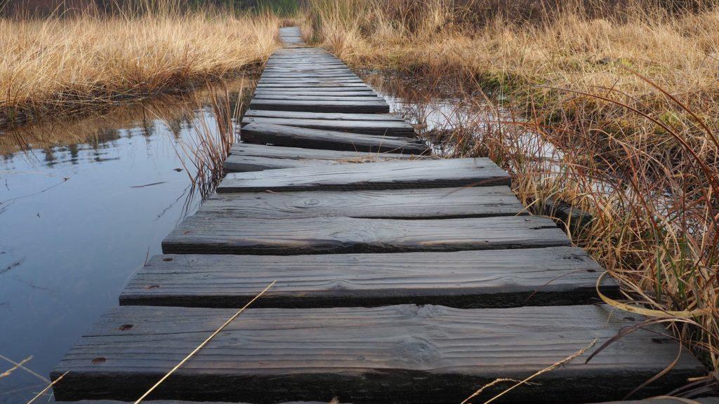 Meilensteine - der wacklige Holzsteg im Hohen Venn